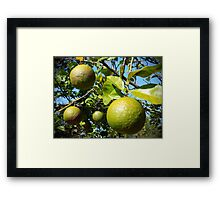 Wild Citrus Framed Print