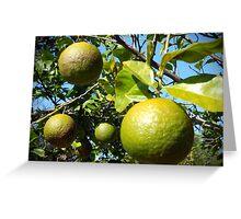 Wild Citrus Greeting Card