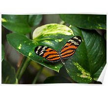Tiger Orange Butterfly Poster