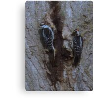 These Two Woodpeckers Pentax (X-5) 16 Megapixels Canvas Print