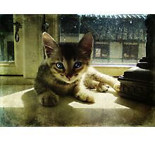 Kitten in the Sun Photographic Print