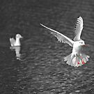 Selective colouring gull by SteveHphotos