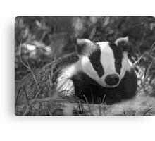 Black & white Badger Canvas Print