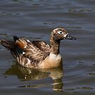 Scruffy Duck by Rick Playle