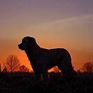 Dawn by Trine