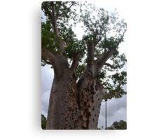 Boab Tree Canvas Print