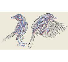 Western Scrub Jays Photographic Print