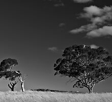 Two trees in the late summer sun by Lee Hopkins