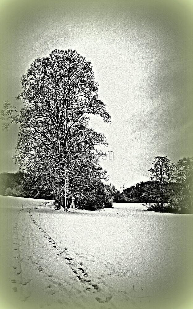 Winter by ©The Creative  Minds