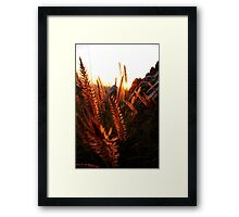 Furry Things 3 Framed Print