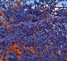 Blues mixed with bits of Orange by Nira Dabush