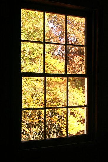 A Window View by Terri~Lynn Bealle