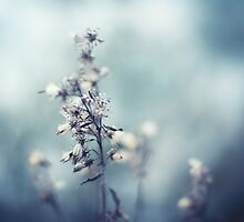Winter Flowers by Jenny Karlsson