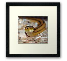 slither, my pet snake Framed Print