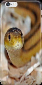 slither, my pet snake by scott staley