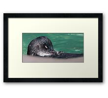 """Little Penguin"" Framed Print"