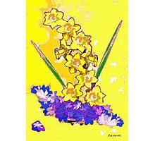 Daffodils and Crocuses Photographic Print