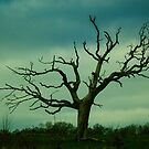 moody tree by edozollo