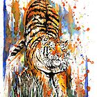 Tiger Stretch. by Calum Margetts Illustration