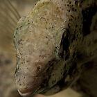 Fish at night by Philmed