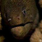 Moray Closeup by Philmed