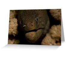 Moray Closeup Greeting Card