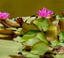 Hidden Bullfrog by Paul Wolf