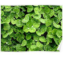 Clovers (available in iphone, ipod, & ipad cases) Poster