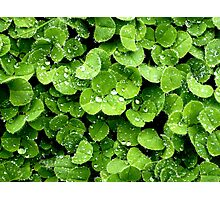 Clovers (available in iphone, ipod, & ipad cases) Photographic Print