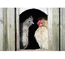 Looking Sunny Out There, Chook Photographic Print