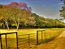 Mountain Pine Ridge Area in San Ignacio - Belize, Central America by 242Digital