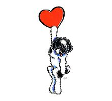 Black Parti Havanese Has My Heart Photographic Print