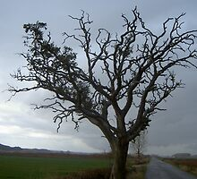 Tree by Prados