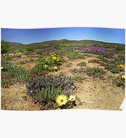 Namaqualand#2 - South Africa Poster