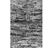 Life Force Photographic Print