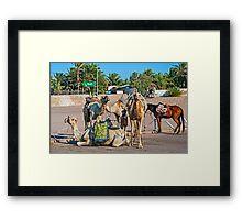 Camels. Framed Print