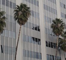 San Jose Palm Trees by tomduggan
