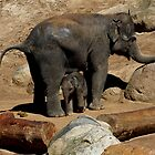 Elephant Mother and Son by GP1746