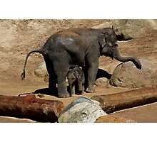 Elephant Mother and Son Photographic Print