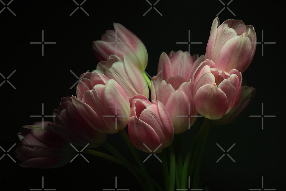 Tulips 2 by EbyArts
