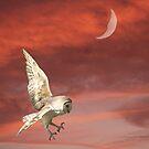 Nocturnal Hunter by byronbackyard