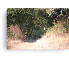 A Path to Contemplate  Canvas Print