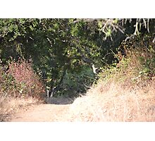 A Path to Contemplate  Photographic Print