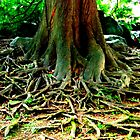 Roots by kchase