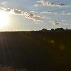 Field of Light by woodrco
