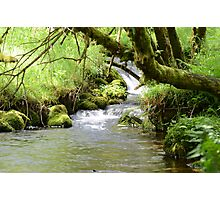 Ancient woodland stream, Devon England Photographic Print
