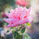 Pretty in pink by Debbie Lourens