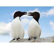 Razorbills chatting, Saltee Island, County Wexford, Ireland Photographic Print