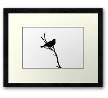 Australian Raven Framed Print