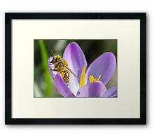 Another Sign Of Spring Framed Print